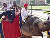 Elephant Ride, Jaipur, India (photo: Njei M.T)