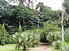 The Botanic Garden Limbe( photo: Njei M.T)