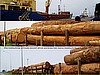 Timber leaving Cameroon (photo: Njei M.T)